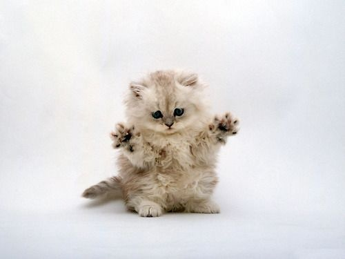 Jazz hands.....this is for you Elizabeth!  Lol.