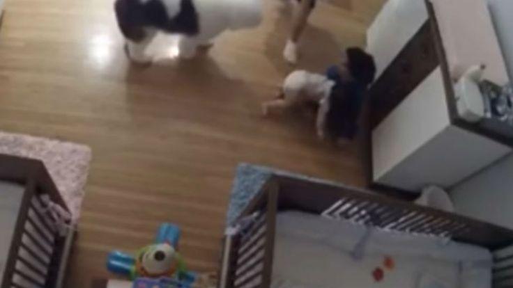 #Video: un bebé se cayó de una mesa para cambiar pañales pero su hermano de 9 lo atrapó y le salvó la vida - LA NACION (Argentina): Video:…