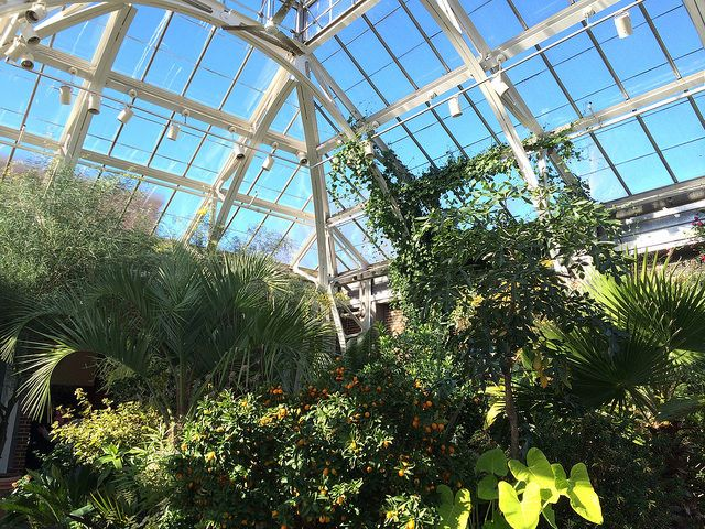 177 Best Images About Green House Green Roof On Pinterest Green Roofs Rooftop Gardens And