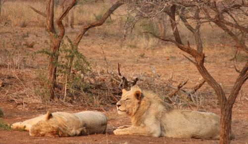 iSimangaliso now the most diverse park in Africa | IOL