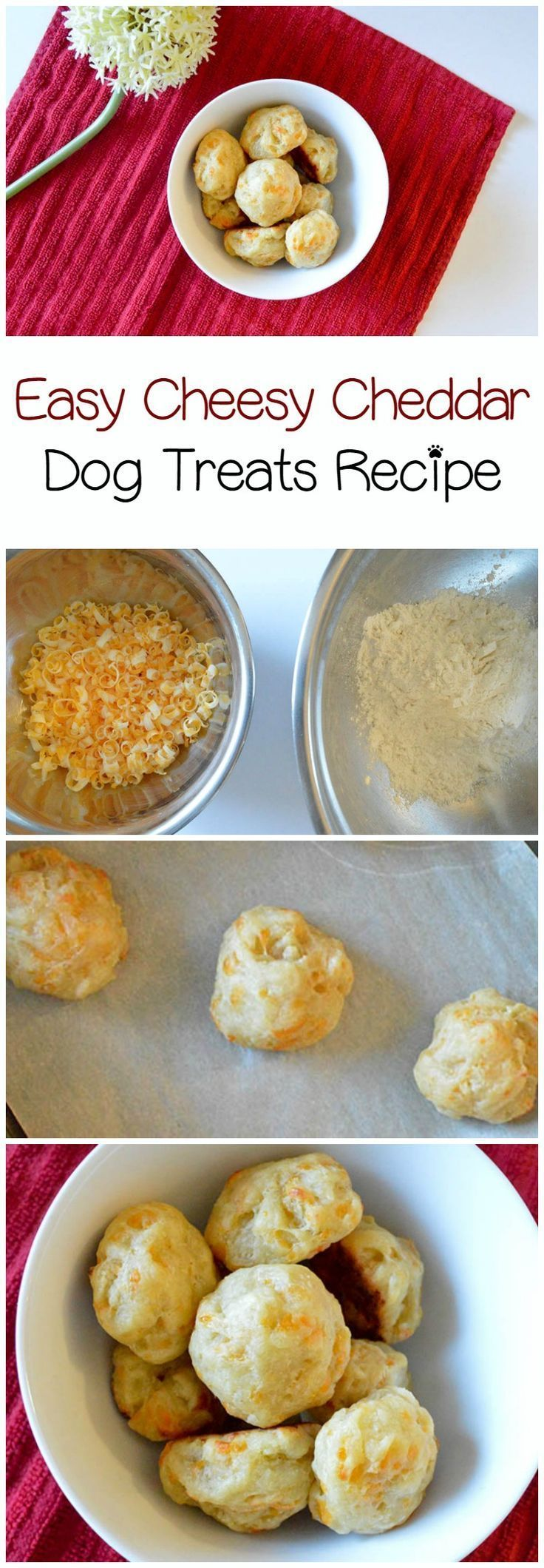 Reward your dog's excellent behavior with a homemade dog treat! Our easy cheesy cheddar dog treat recipe will become a quick favorite!