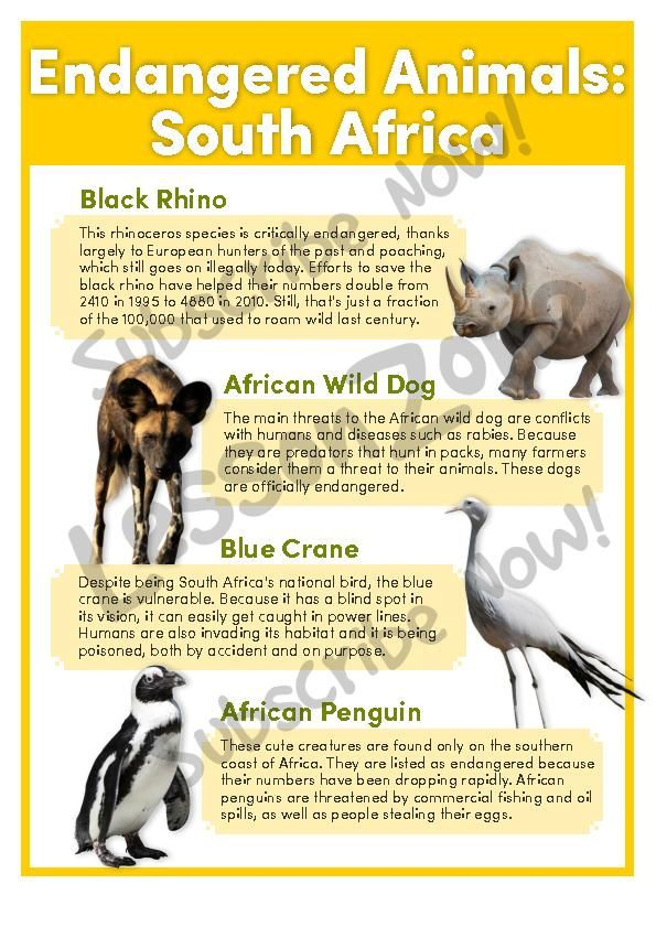 extinction of animal species essay 10 tragic stories of extinct animals  although the dodo was never a particularly  numerous species (the fact that it was flightless made it susceptible to floods.