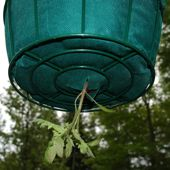 Upside Down Tomato Planter - Before You Buy or Make an Upside Down Tomato Planter
