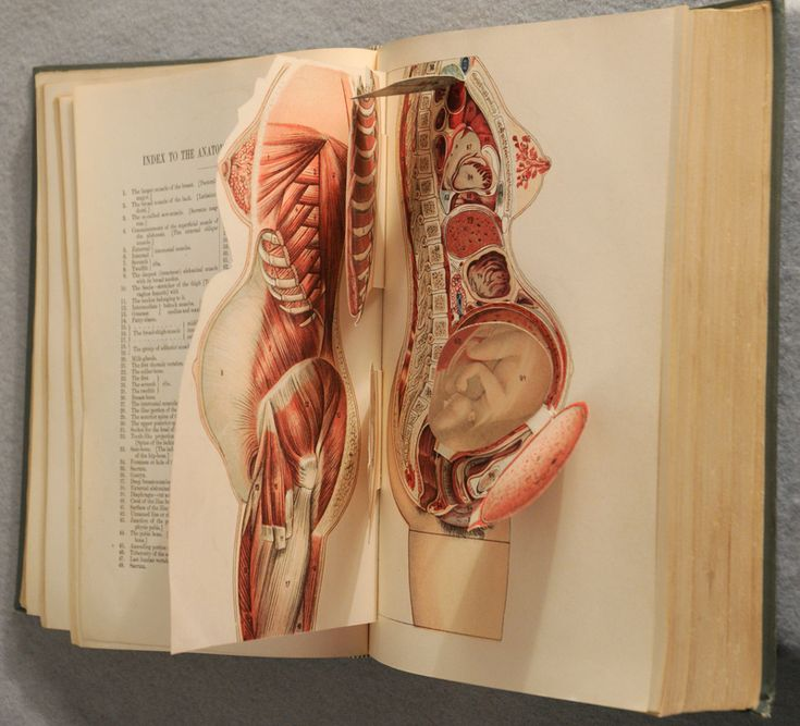 "Anatomical flap books such as this one ""invite the viewer to participate in virtual autopsies, through the process of unfolding their movable leaves, simulating the act of human dissection."" Caption from link"