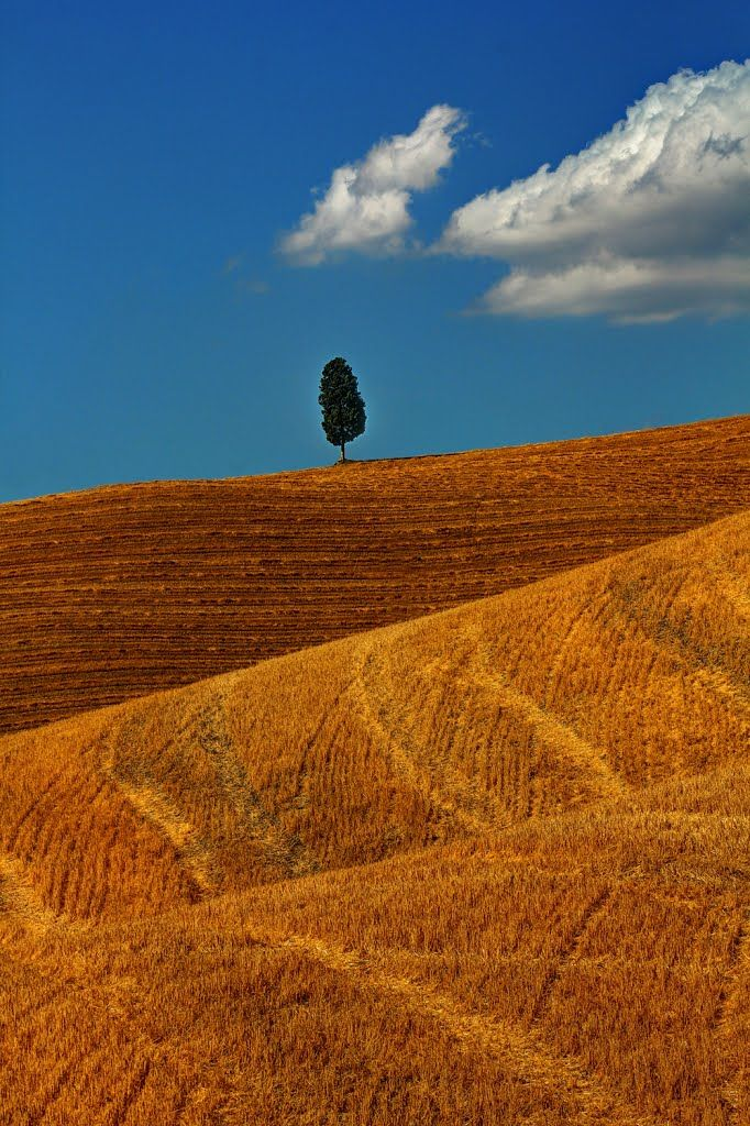 A view of the fields in Montalcino, #Siena #Italy - https://www.yamadu.it