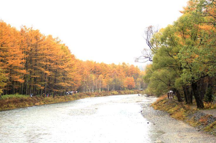 Autumn leaves of Kamikochi and Azusa/上高地の紅葉と梓川