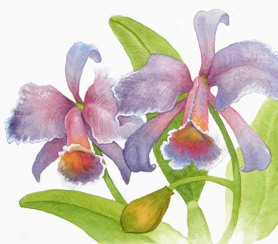 "Watercolor Paintings of Orchids | Original watercolor painting of Orchids (El Diablo) 12"" x 9"""