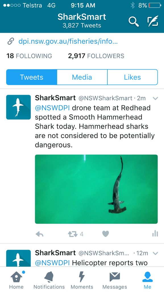 Hammerhead Shark detected by Hover UAV during shark detection trials