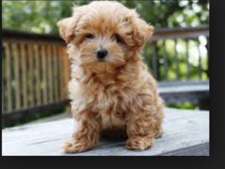 Little teddy bear