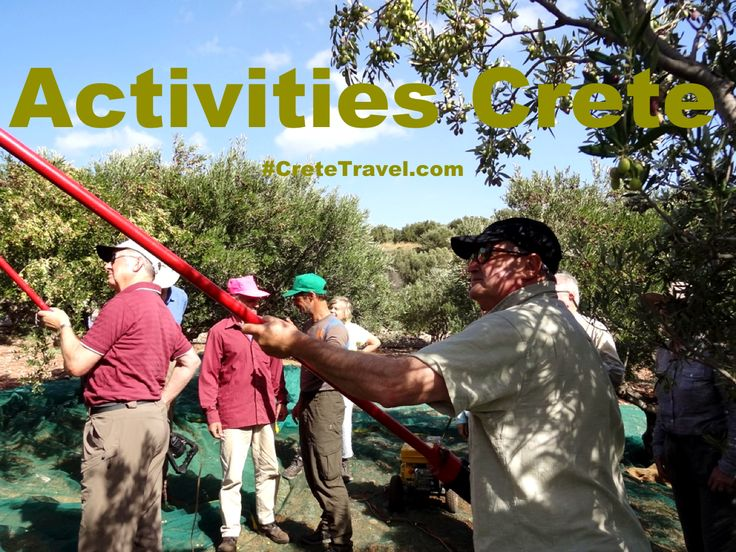 The #Crete We #Love ... The Crete You Are Looking For! Olive harvest by Terra Minoika Villas : http://www.cretetravel.com/hotel/terra-minoika-villas #Activities #Autumn #Kato #Zakros