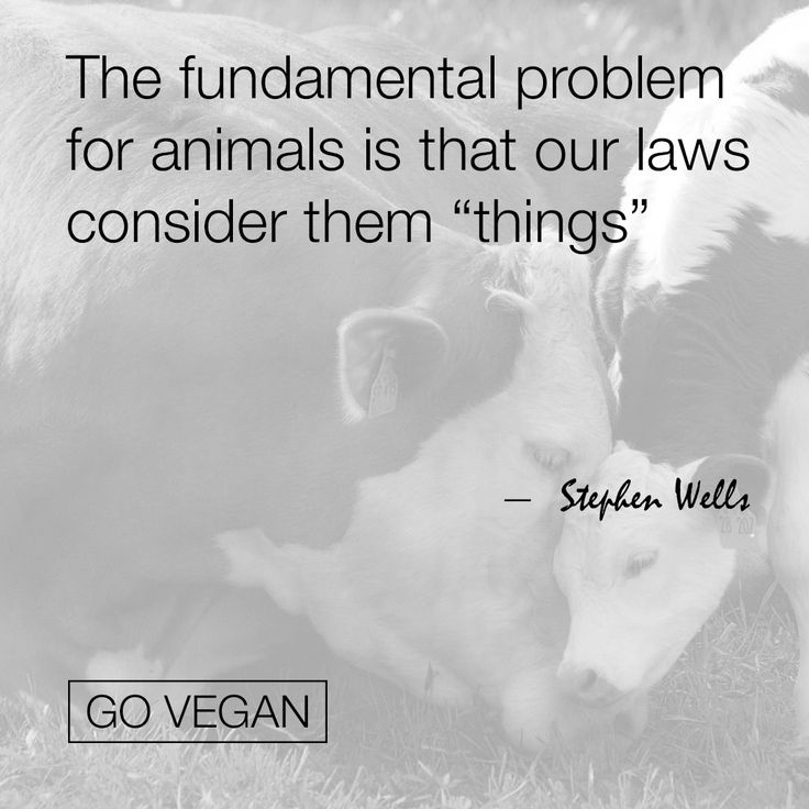 Pinterest Animal Quotes: Best 25+ Welfare Quotes Ideas On Pinterest