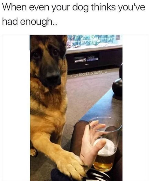 17 Best Images About Reinforcement On Pinterest: 17 Best Ideas About Animal Memes On Pinterest