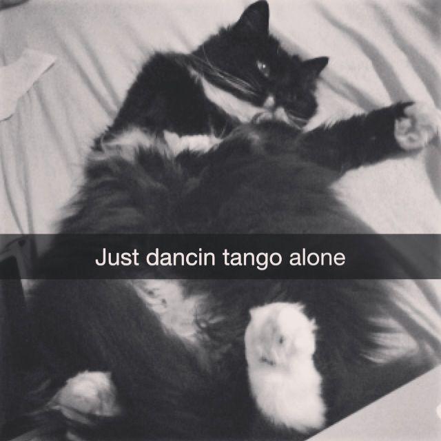 Cat just dancing tango alone.