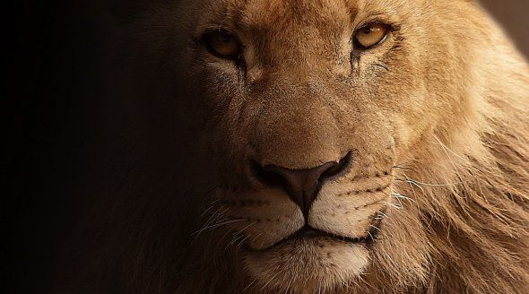 Xanda was shot when he roamed outside the protected area of the Hwange National Park.