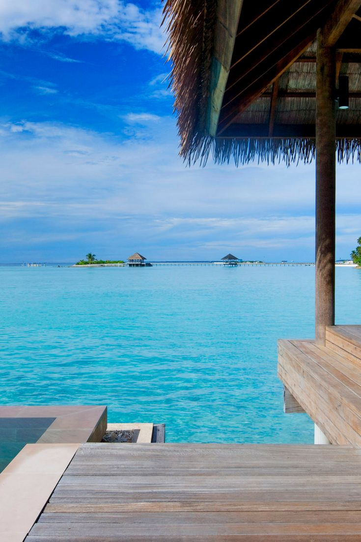 Discover the world's finest aquatic creatures on the bed of the big blue ocean in the Maldives