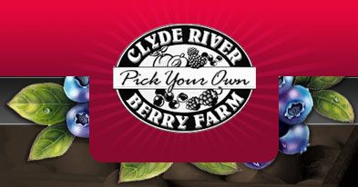 Clyde River Berry Farm- pick your own blueberries, strawberries and more!