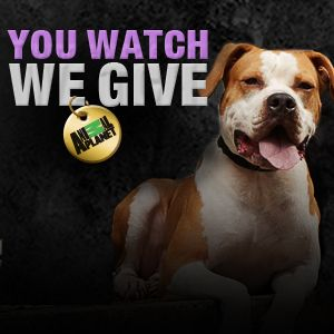 Pit Bulls and Parolees: Animal Planet