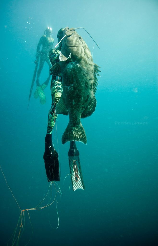 797 best spearfishing images on pinterest diving for Loss of motor control