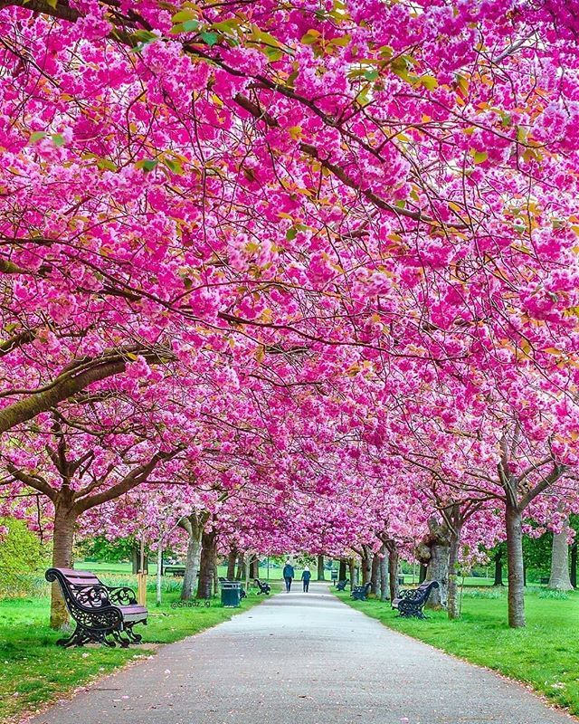 Pin By Rachel Patten On Amazing Pictures Beautiful Gardens Beautiful Nature Spring Photography