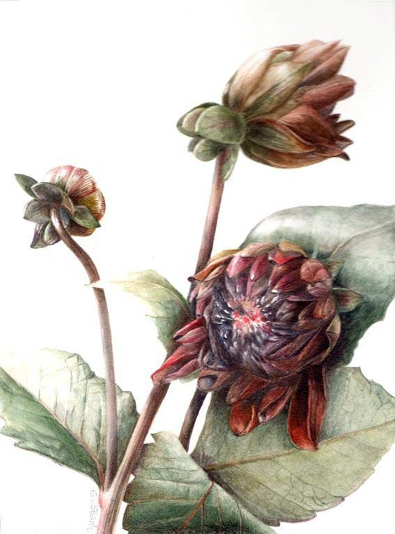 19 best images about art elaine searle on pinterest