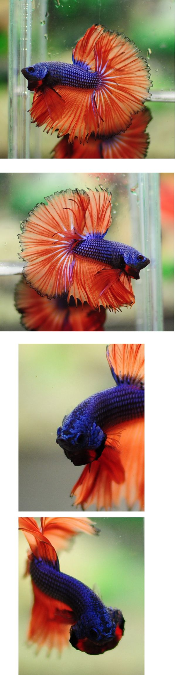 150 best Рыбы images on Pinterest | Water animals, Exotic fish and ...