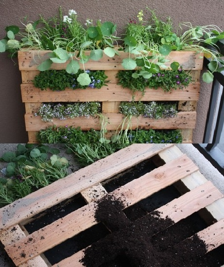 Pallet into a Garden - for renters who can't dig up the back yard!