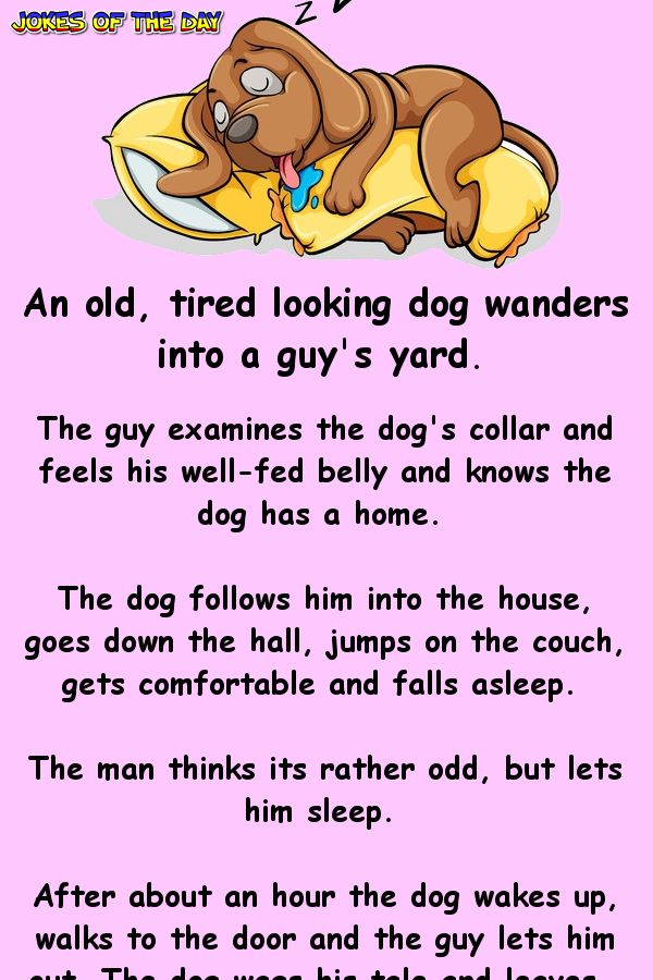 An Old, Tired Looking Dog Wanders Into A Guys Yard-4334