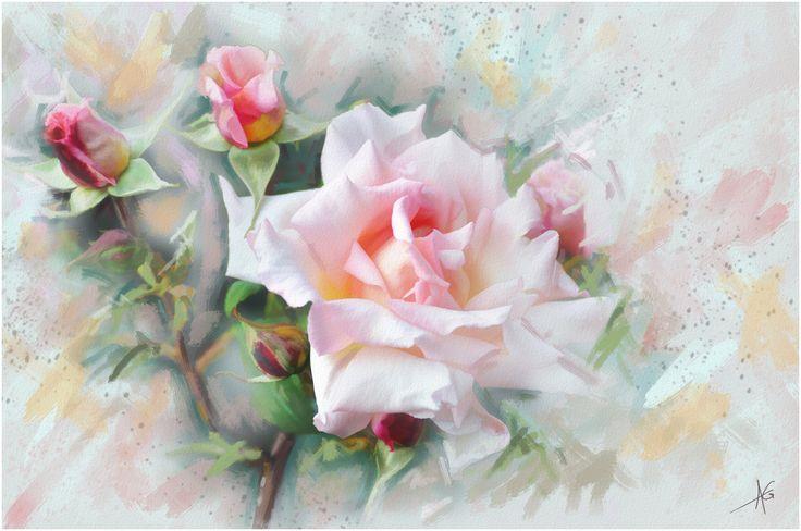 Скачать обои графика, цветы, Роза, нежно, обои от lolita777, живопись, пастельные тона, цветок, розовая, раздел живопись в разрешении 4288x2848