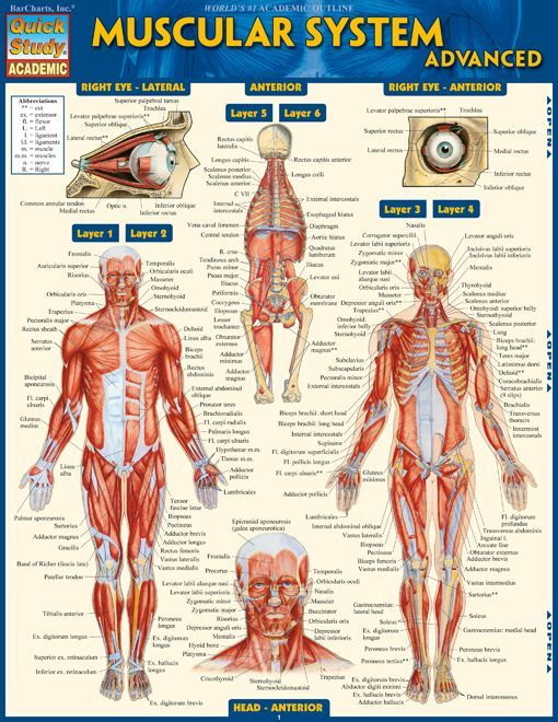 73 best nursing and medicine images on pinterest, Muscles