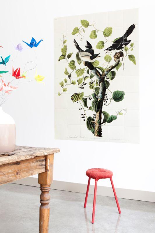 inspirational image ixxi image bank 'Teylers' $125.00 #wallart #interior #design #audubon