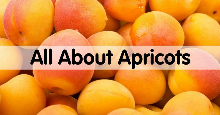 How to Pick, Prep & Store Apricots + nutrition information, recipes, fun facts and more!