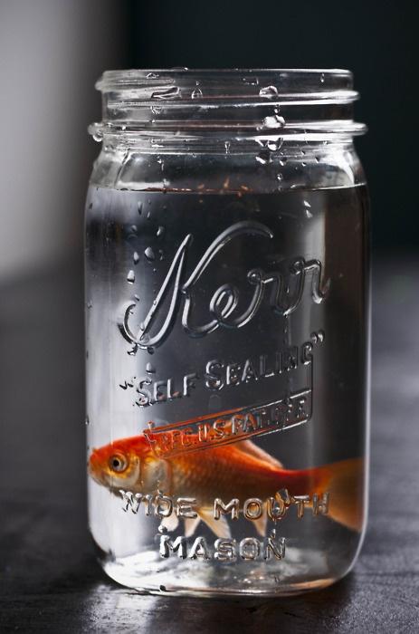 155 best black white pop of orange images on pinterest for Fish in a jar