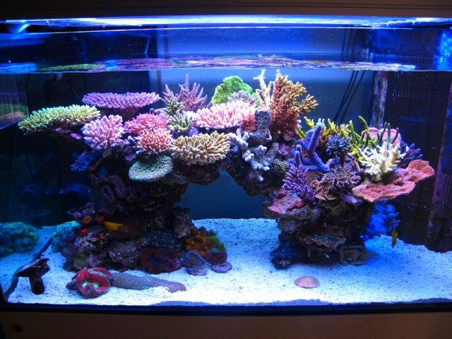 Minimini's ZEOvit tank in Japan - interestingly, he seemed to have gone with T5 instead of LEDs.