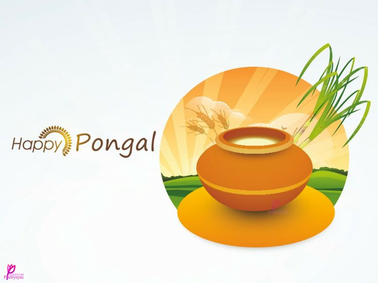 Pongal Festival of Harvest Celebration Happy Pongal Festival Season Pongal Cards with Pongal SMS and Greetings