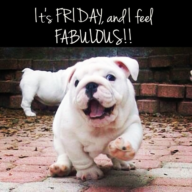 Fabulous Friday!! bulldog friday Cute animals, Happy