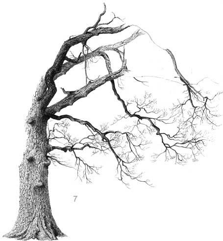 How to Draw an Oak Tree Step by Step
