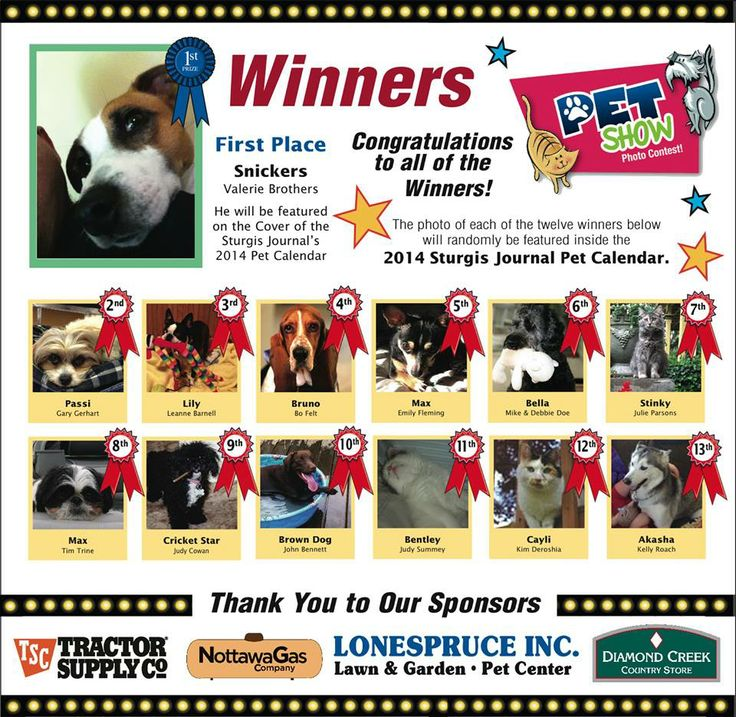 Our little poodle won a place on the Sturgis Journal Pet Calendar, she already won a place in our hearts..