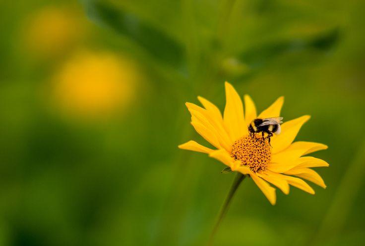 Sexy Yellow by Aziz Nasuti on 500px