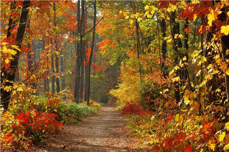 Fall leaves trail 1923x1278