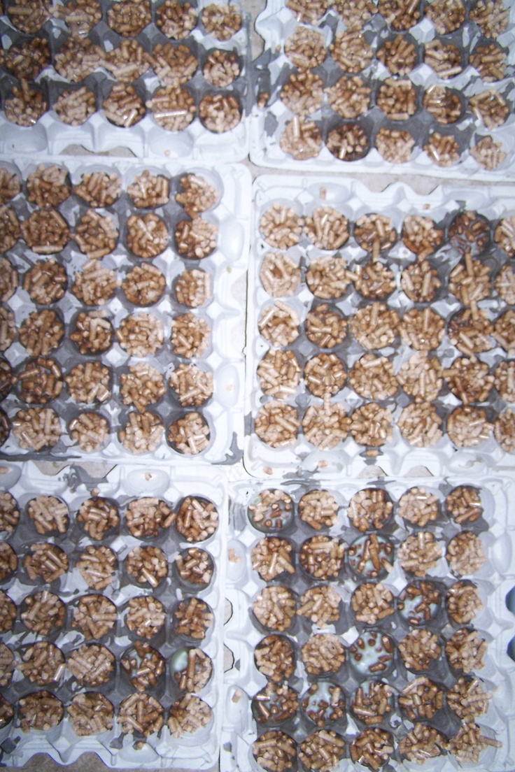 Fire starters - old egg carton + wood pellets for pellet stove + melted wax from old, broken, or really cheap candles.  1) Fill egg slots ~3/4 full with pellets 2) melt wax in oven in metal pan or can 3) using metal ladle - pour a bit of wax on each egg section 4) let cool.  To use pull or cut off a small section of DIY fire starter - light :D