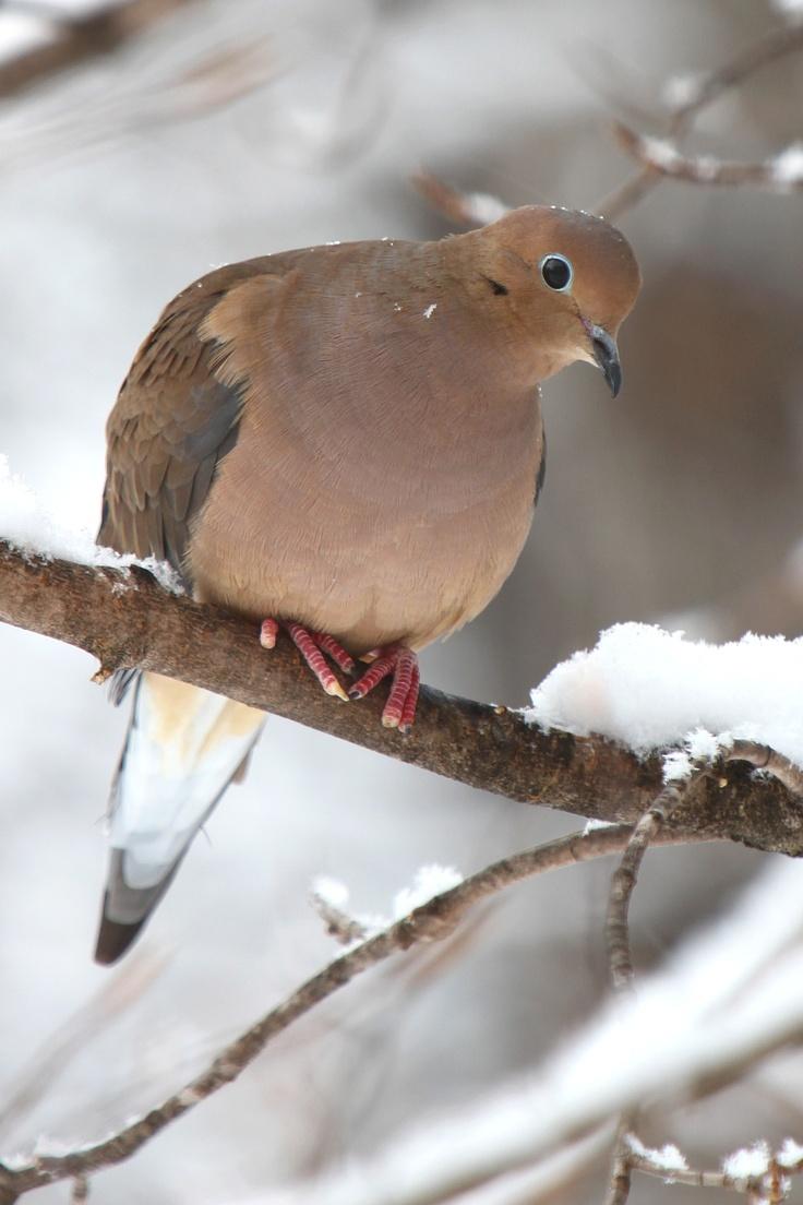 NATIONWIDE BIRD