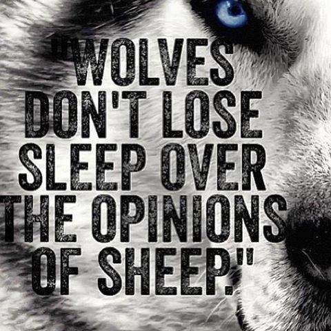 Wolf Quote 12. Wolf quotes on PictureQuotes.com.
