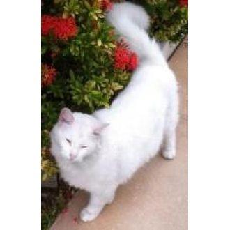 Peter | The Cat Network Inc | Miami, Florida | Pets.Overstock.com