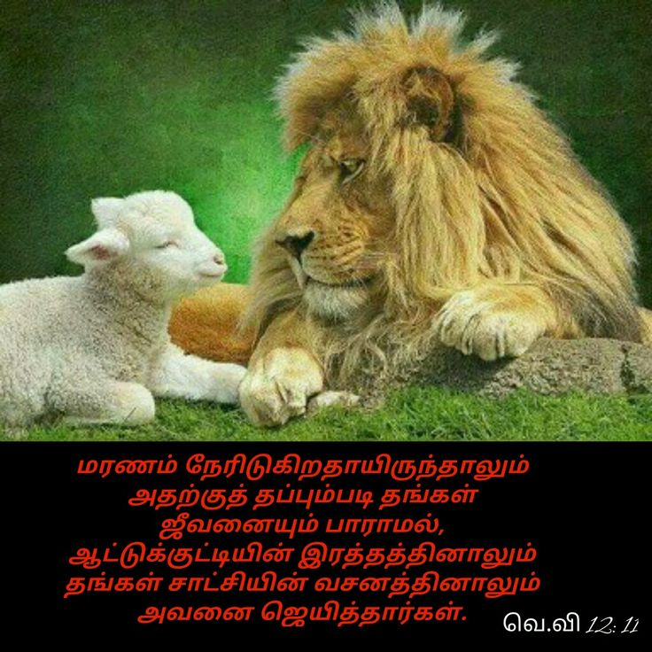 Pin by Tamil mani on Tamil Bible Verse Wallpapers Lion