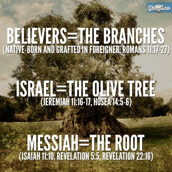 """Thankful to be grafted in! ALWAYS meant to be ONE in Messiah-never to be a separate """"religion""""."""