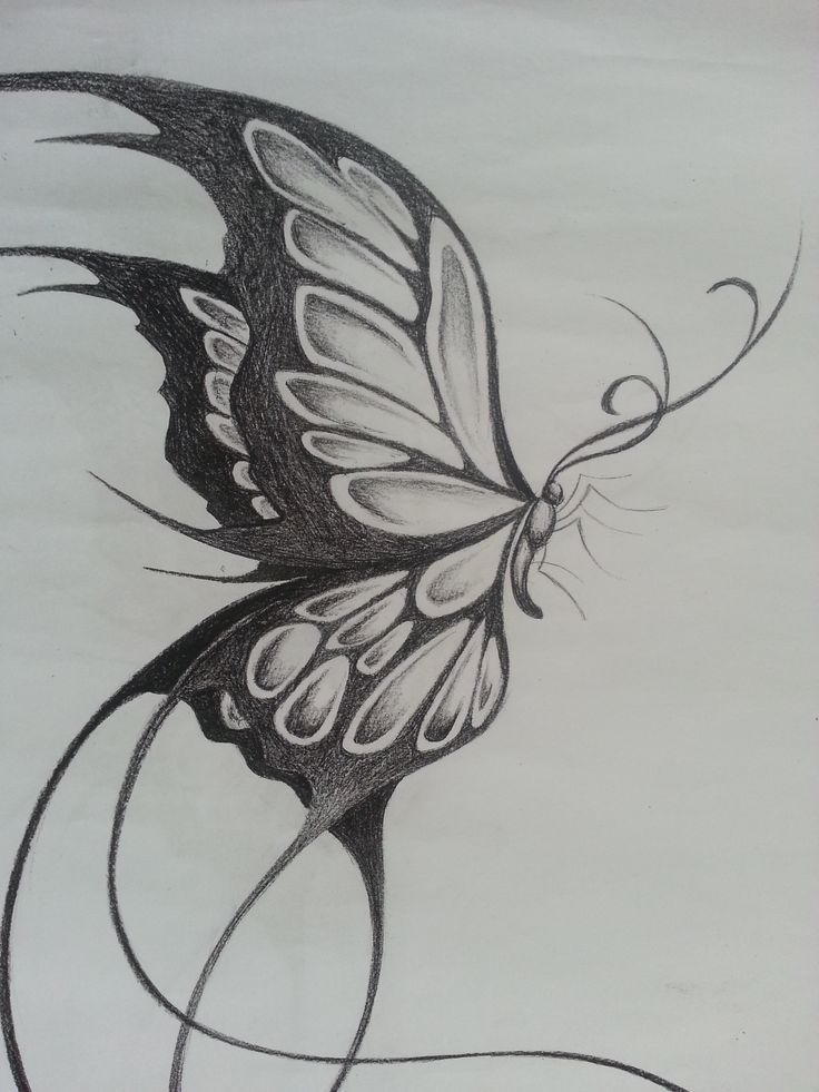 Pencil sketches of butterflies on flowers original design