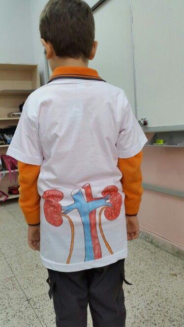 Organlari taniyorum etkinligi