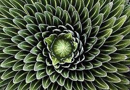"""Résultat de recherche d'images pour """"spirale aloe"""""""