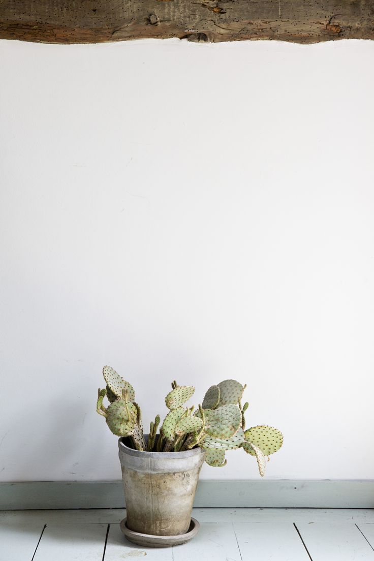 classy pictures of cactus house plants. Lana Pribic  Indoor PlantsIndoor 48 best Grow Succulents and Cacti images on Pinterest