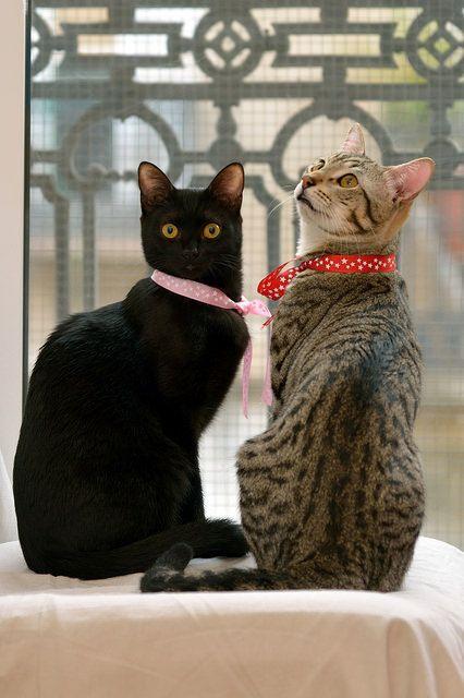 mostlycatsmostly:  Vera & Mulfin(via Adopciones.Felinas Valencia)
